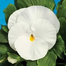 Виола Delta White (белый)