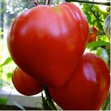 Томат Бычье сердце красное